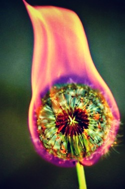 sowhor3able:  Flower burning. <3