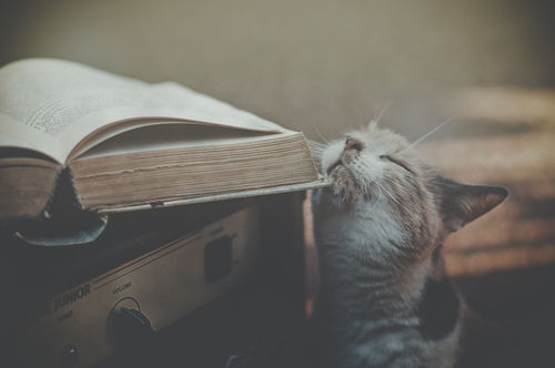 booksdirect:  Everyone loves to read.