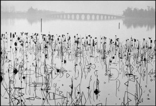 René Burri, Former Summer Palace. Dead lotus flowers on the Kunming Lake, Beijing, 1964