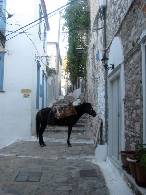 © own Hydra, Greece There are no cars on Hydra- donkeys are used as a means of transportation and to carry goods around on the island