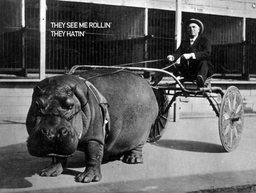 Hate the hippo, not the player.