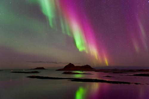 funnywildlife:  Purple Haze Aurora!!