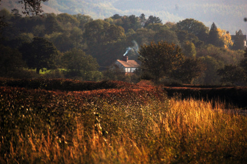 caught-in-another-world:   Wales - Autumn (by Miss Macleod)  I want to be there right now! Make that forever.