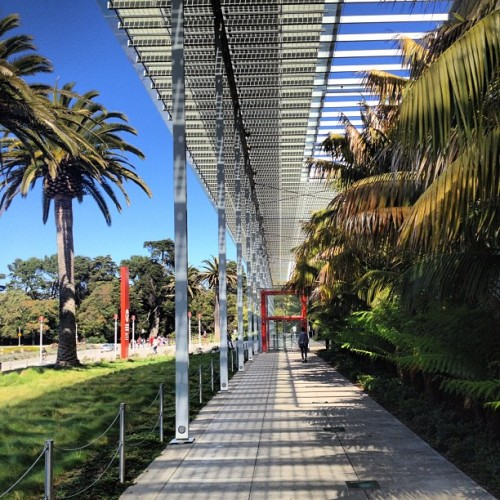 California Academy of Science by Renzo Piano #archdaily #architecture #renzopiano #sanfrancisco #california #instagood #iphonesia  (Taken with Instagram at California Academy of Sciences)