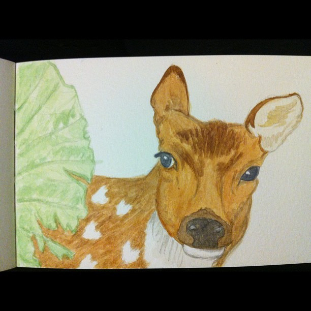 A Deer watercolour on Flickr.