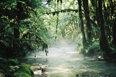 stolenfootprints:  Dagobah. by -MRGT on Flickr.