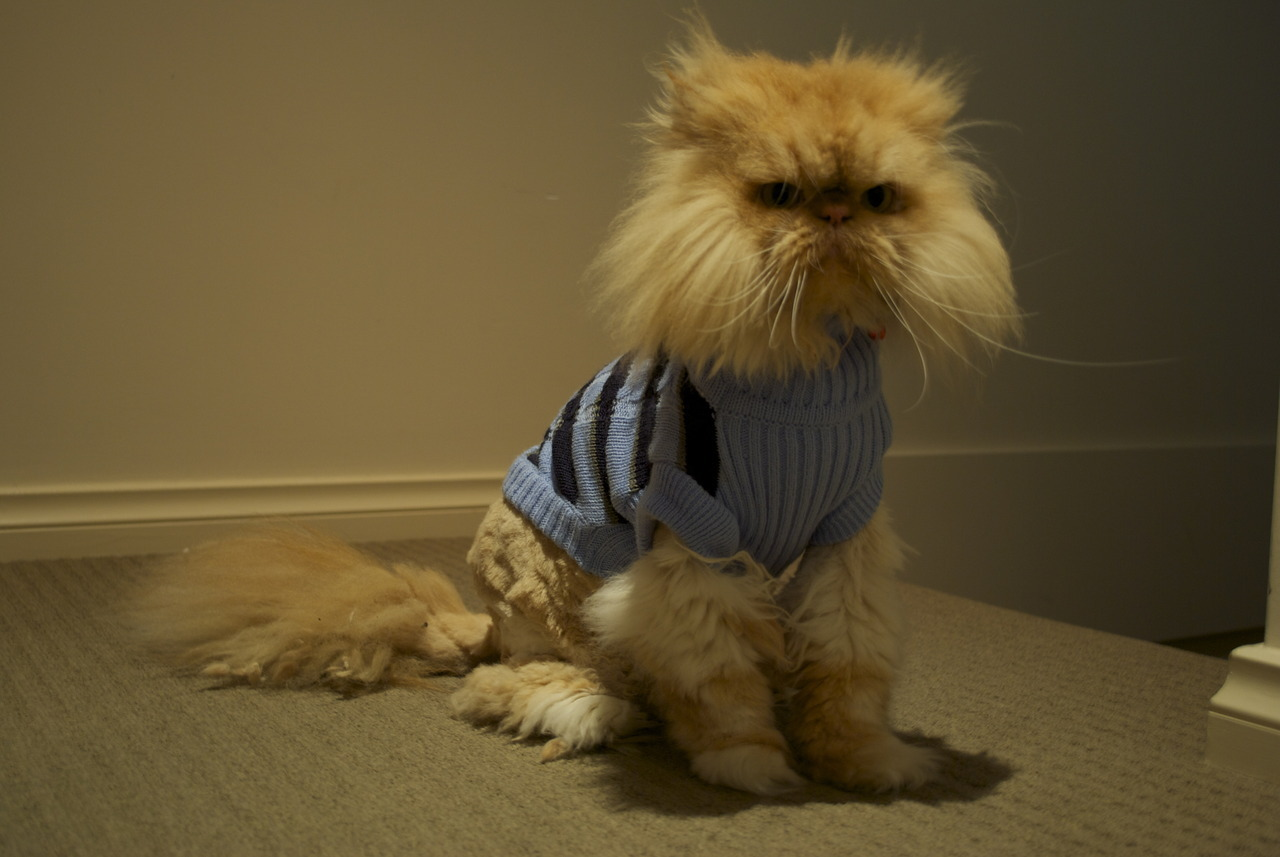 """You can't go outside and play without your sweater, mama said…"" Photo by ©Nathalia Spier"