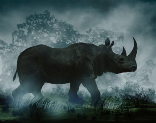 Happy World Rhino Day! Image by Didier Massard.