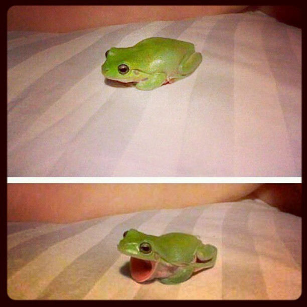 Hehehe cute froggy #notmyphoto  (Taken with Instagram)