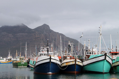 Boats in Hout Bay, Cape Peninsula, South Africa. Barcos em Hout Bay, Península do Cabo, África do Sul. Photo copyright: flowcomm