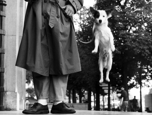 Elliott Erwitt  France, Paris, 1989 From 'Elliott Erwitt. Retrospective' at Kunst Haus Wein, Vienna