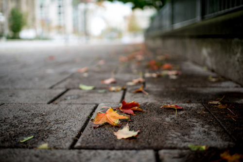 Autumn by PhotoBal on Flickr.