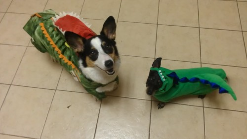 corgiaddict:  Pavlov the corgi and his older brother Watson are both dinos for halloween. bonus points for naming your corgi pavlov! they both make perfect dinos!