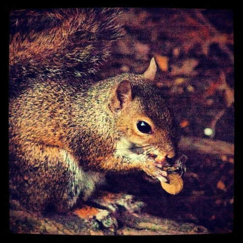 We fed them raw peanuts. :)   #statigram #hipstamatic #best_photos #igsg #instagood #iphonesia #jj #iphoneonly #photo #instagramhub #all_photos #igers #nature #intothewild #tagstagram #beautiful #lafreniere #lafrienierepark #neworleans #nola #igersoflouisiana #igersneworleans  (Taken with Instagram at Lafreniere Park)