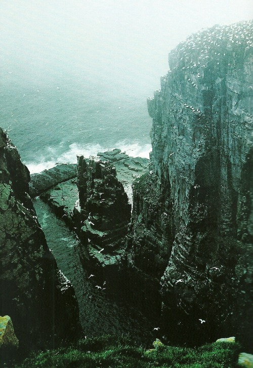 vintagenatgeographic:  Cape St. Mary's, Newfoundland National Geographic | May 1986
