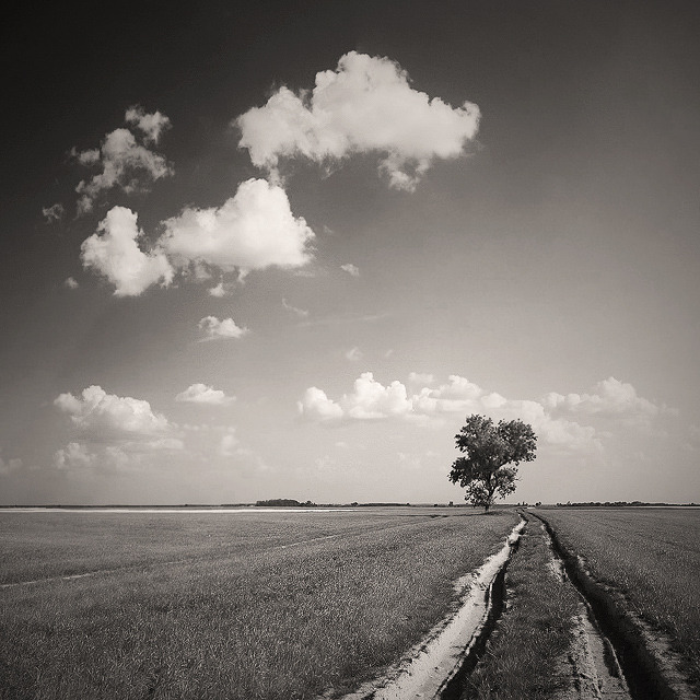 Once by Zsolt Zsigmond. The Law of Thirds is strong with this composition.