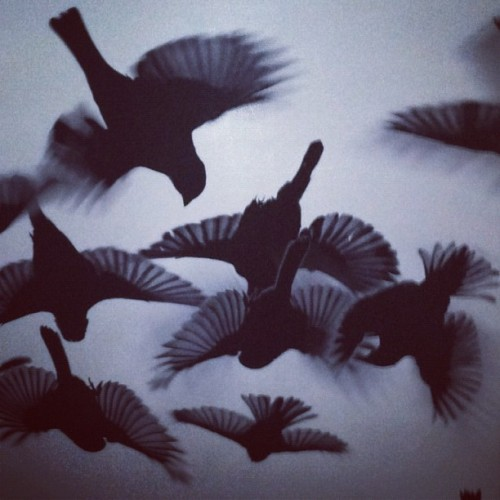 Fly. Just.         Fly. (Taken with Instagram at Bloodhound)