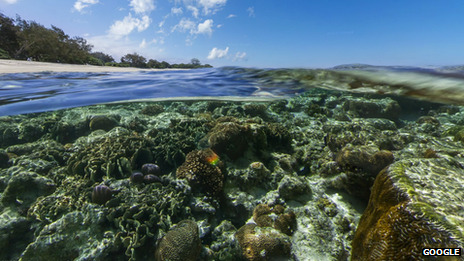 Google adds coral reef panoramas to Street View maps Those crazy bastards.