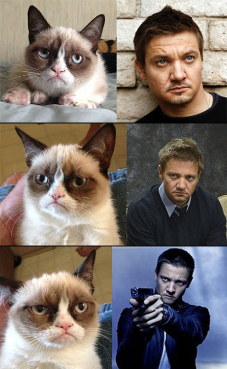 livefullr:  Pissed off cat vs Jeremy Renner