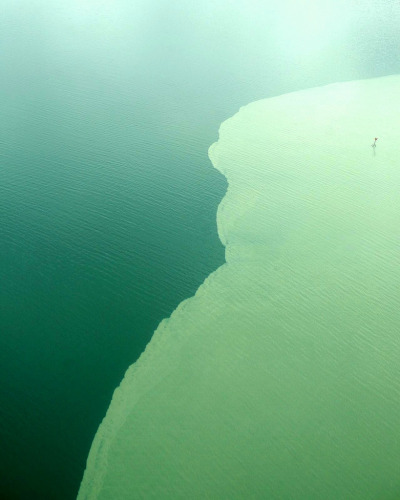 opticoverload:  Salt Line  Aerial view of two different water bodies mingling in southeast alaska. Water, laden with silt from receding glaciers, is pushed into the darker saltwater.