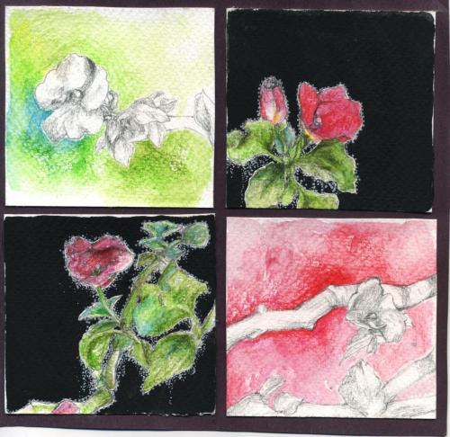 nature study: flowers ink, water color pencils, pencil