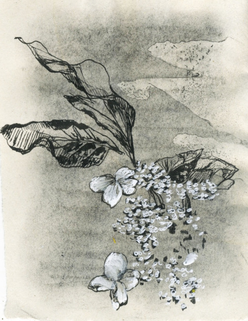 nature study: flowers ink on charcoal