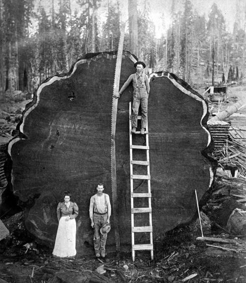 Sequoia National Park, California, 1910.