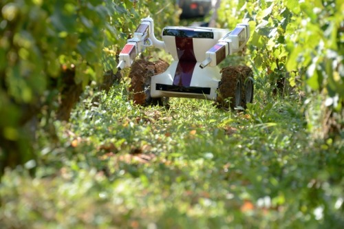 I for one welcome our robot overlords tending the vineyards in France.