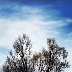 Winter Sky - #landscape #sky #sky_collection #nature #blue #clouds #winter #tree #instagood #instamood #jj # (Taken with Instagram)