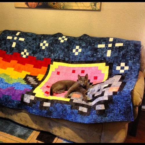 Marty, A.K.A., the REAL Nyan Cat, chilling on his throne.