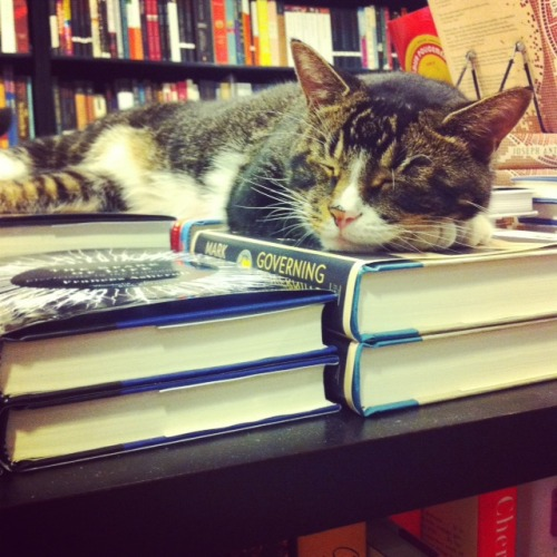 communitybookstore:  @TinytheUsurper is sleeping on top of GOVERNING THE WORLD. How appropriate.