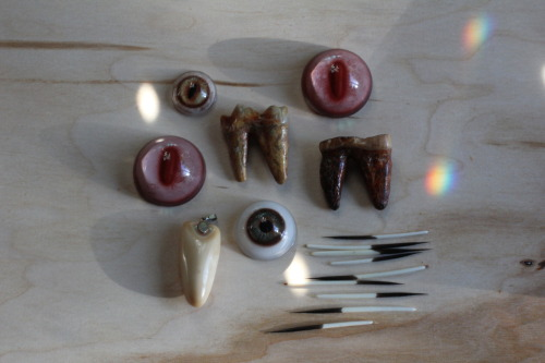 new toys to play with, glass eyes, quills, and cave bear teeth, Pleistocene age, 2 million - 10,000 years ago, (from my favorite shop, Paxton Gate) bone a day inkhead