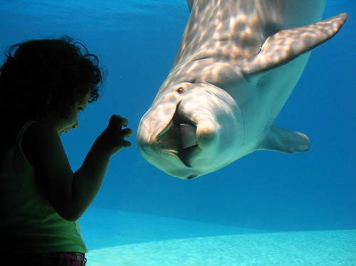 -seaworld:  aww!