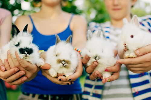 4twa:  226/365: bunnies! by SuperDewa on Flickr.