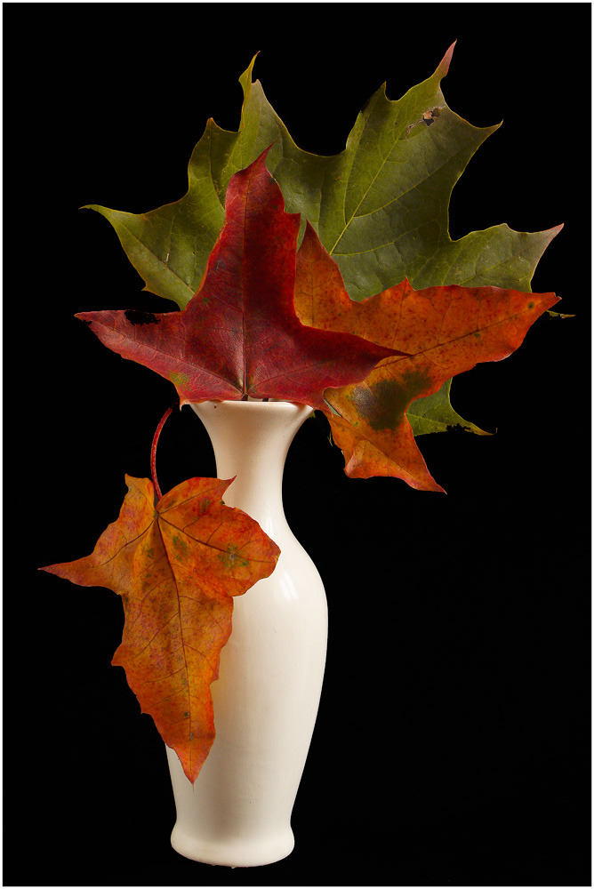 Autumn Bouquet by scbi