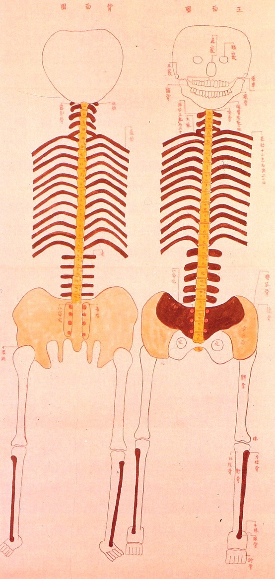 Anatomical illustrations from Edo period, Japan