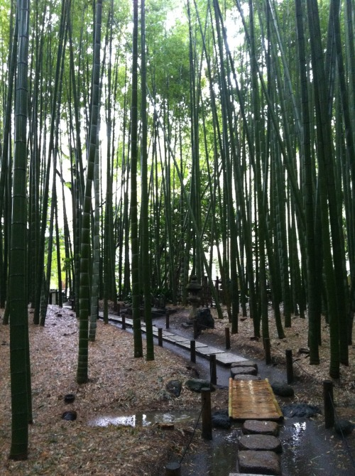 Was in a bamboo garden in Kamakura. Had some green tea soup here, so fucking good.