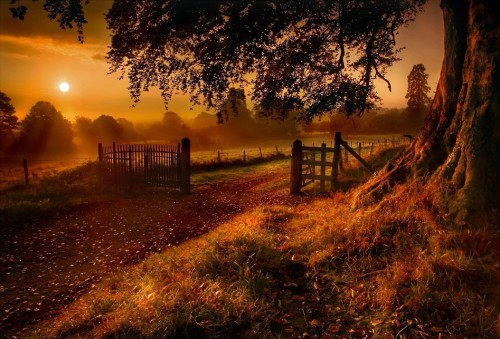 cavalierzee:  Autumn SunriseGary McParlandVia: 1x  Got to love Autumn mornings!