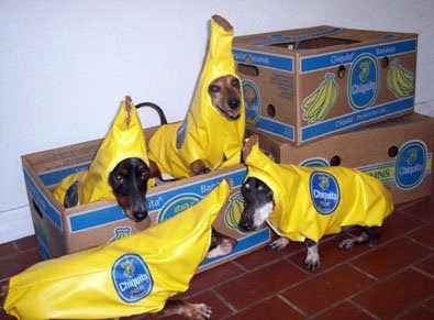 I am the grinning dog in a Banana suit.