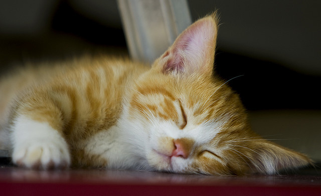 ilovecatsok:  Sleepy Kitty by Domain Barnyard on Flickr.
