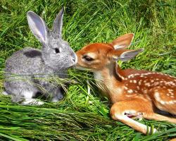 unlikelyfriendshipsbook:  The Fawn and the Bunny