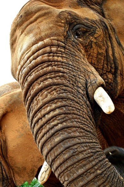 earthlynation:  elephant by picture taker 2
