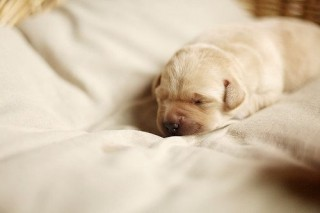 """(via Sleepy Puppy.)"""