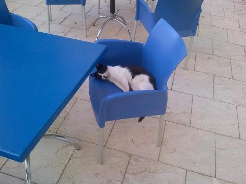 "OUR SCHOOL CAT IS SO ADORABLE. It's not our ""mascot"" or icon. HAHAHA. It's just an 'adopted' cat or should I say, a cat that made HW its home. XD  reposted from a schoolmate."