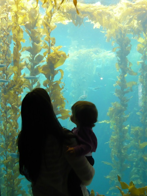Been there? Our famed Kelp Forest exhibit is a world of wonder, perfectly expressed in this photo from visitor Olivia Bradbury Nelson.