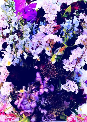 peachnaked:  youthbliss:  loveisallthingsmaroon:  another flower edit  lovvve it  Forever fave
