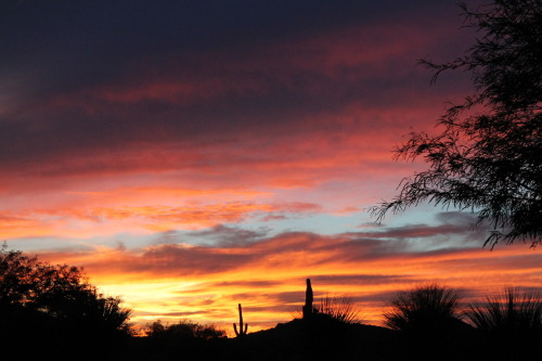 nothing like a Tucsonian sunset.
