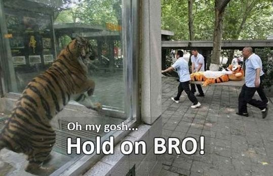picsauce:  Hold on, Tigger!
