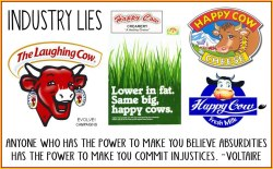 "Dairy is a dirty business. There is no such thing as a ""laughing cow"", dairy cows are not ""happy"", they do not live in sunny green meadows, nor do they stroll casually along beaches at sunset, nor work in factories cheerfully packing up butter ""made by cows"". These television adverts are grossly deceptive and depict scenes far from the ugly truth. Cows only produce milk because they've had a baby. Their milk is supposed to be for their calves, but in the dairy industry calves are considered 'unwanted by-products'.. When you drink milk you condemn an innocent calf to death and its mother to a life of slavery. The abuse and suffering that we inflict upon dairy cows is nothing short of appalling.http://evolvecampaigns.org.uk/evolve/dairy.aspx"