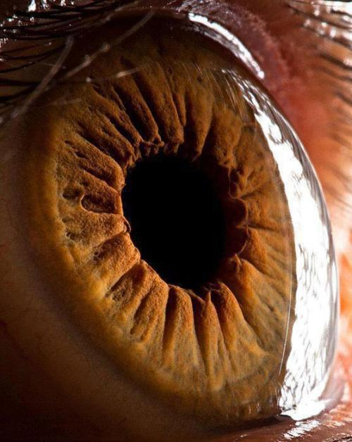 Close Up of the Human Eye. I want to see mine this close please.